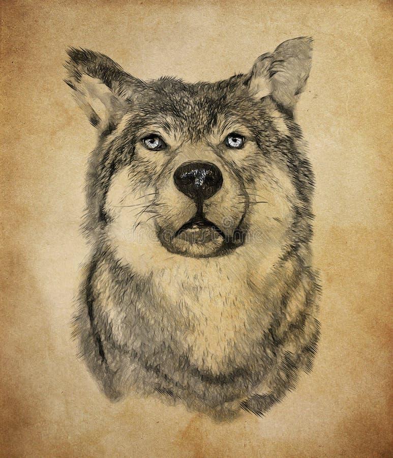 Wolf op uitstekende achtergrond De illustratie trekt, beschrijft stijl stock fotografie