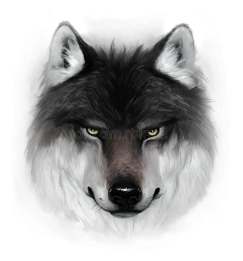 Wolf. Painted gray wolf head on a white background