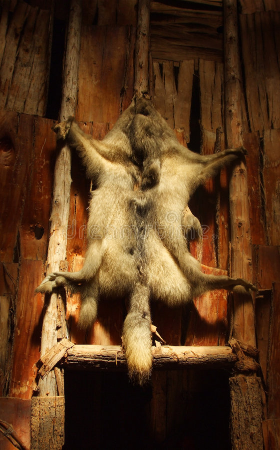 Free Wolf Pelt In Long House Stock Images - 3085144