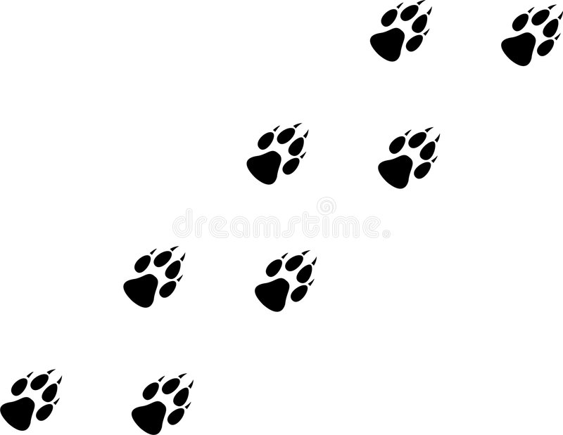 Download Wolf Print stock vector. Image of wild, puppy, black, white - 6882613