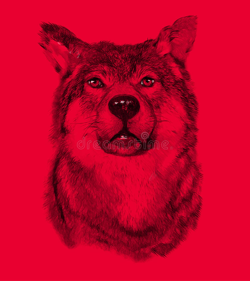 Wolf on red background. Illustration in draw stock photo