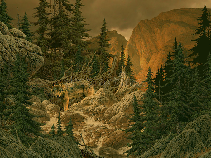 Wolf in the Rocky Mountains. Image from an original 18x24 painting by Larry Jacobsen. / AF-061 stock illustration