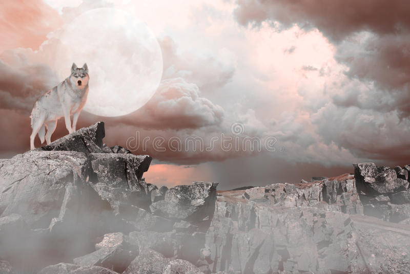 Wolf Standing sur une montagne photos stock