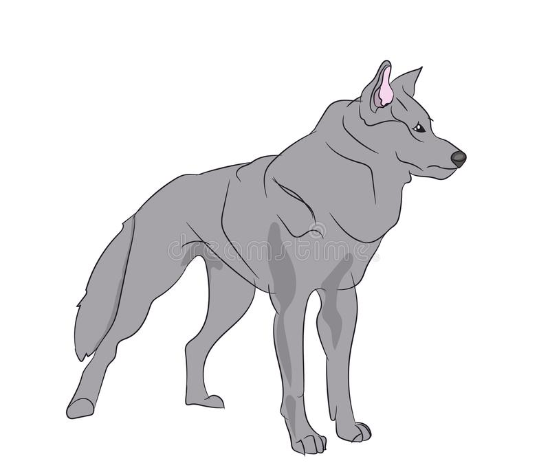 Wolf Vector Illustration libre illustration