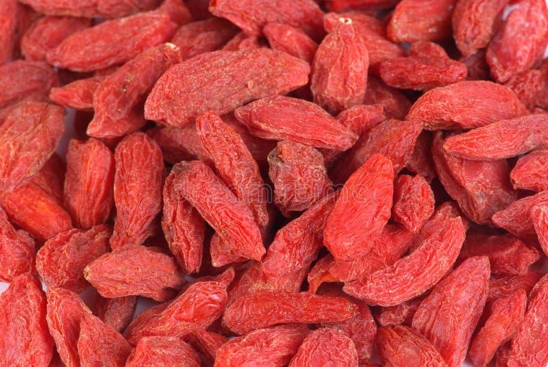Wolfberries stock fotografie