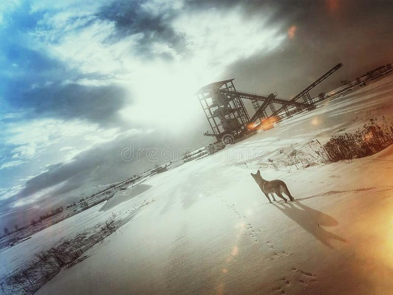 Wolfdog photos stock