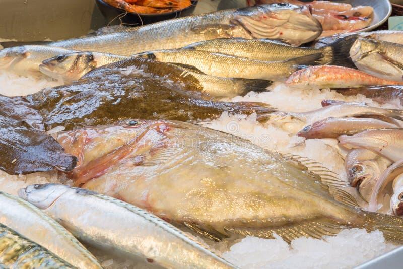 Wolfsbarsch, Makrele, John Dory-Fisch, einige Fische, die auf a stillstehen stockbilder
