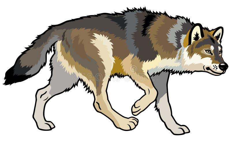Wolfsidan beskådar stock illustrationer