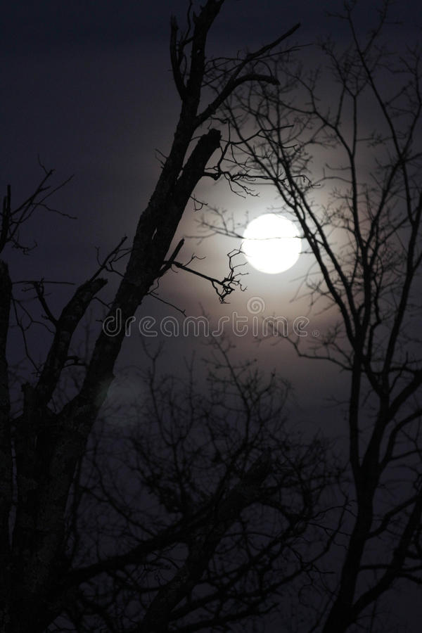Wolfsmaan met naakte takken, verticaal beeld stock afbeelding