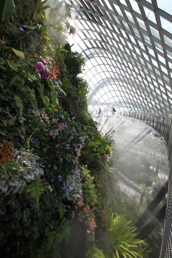 Wolk Forest Walkway Singapore Botanic Garden stock foto