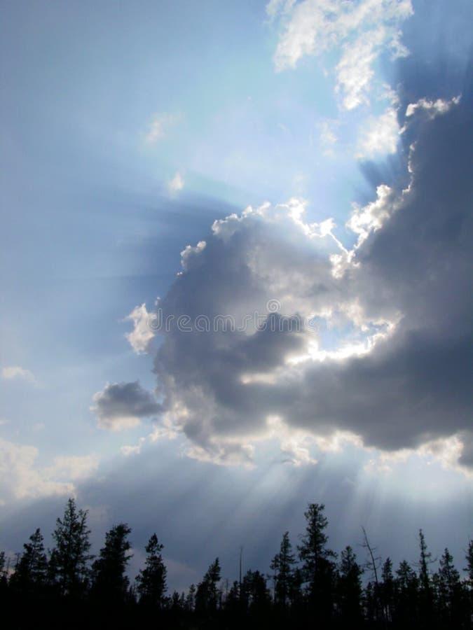 Wolken über Wald stockfotografie