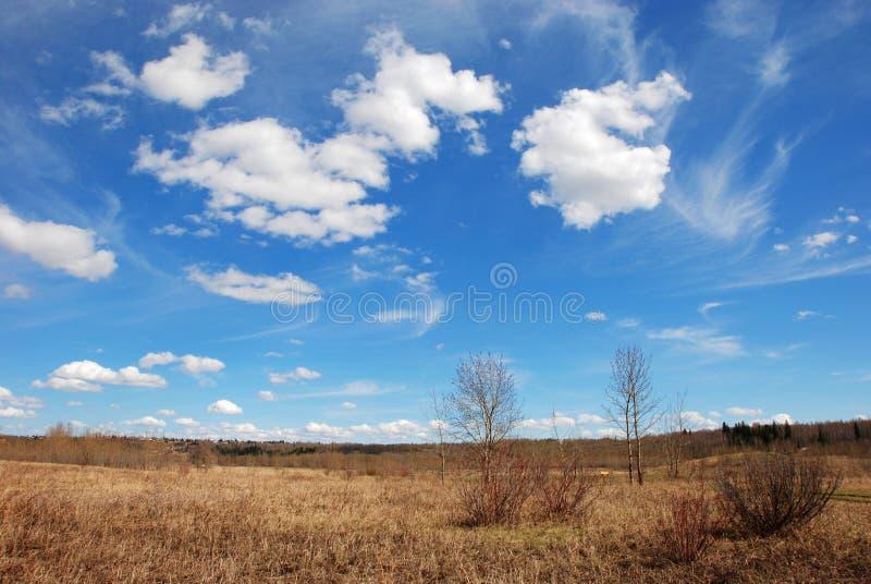 Wolken boven gras stock fotografie