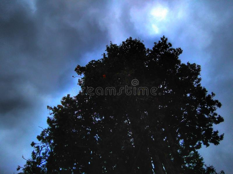 Wolken en boom royalty-vrije stock foto