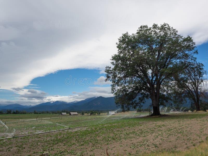 Wolken, hemel, gebied en boom stock afbeelding