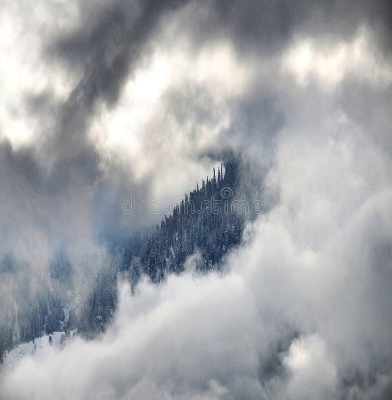 Wolken op Forest In Winter royalty-vrije stock foto's