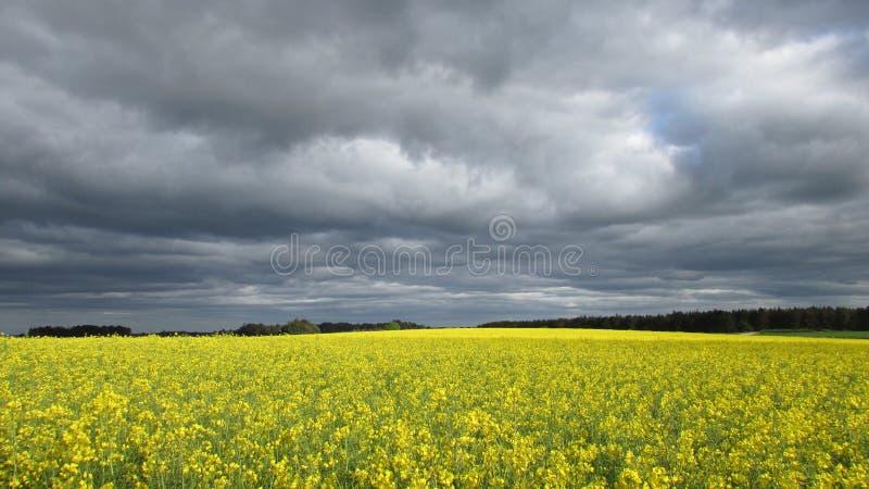 Wolken over raapzaad stock fotografie