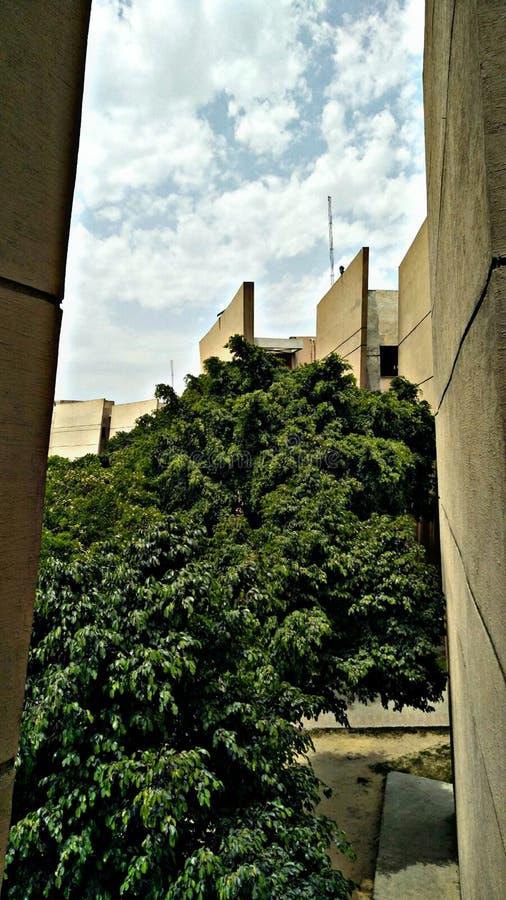 Wolken und Baum lizenzfreies stockfoto