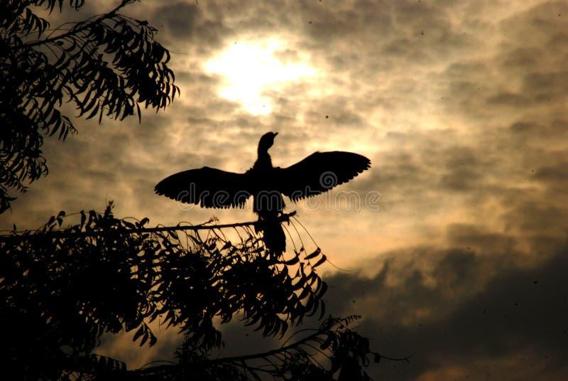 WOLKEN UND FLACKERNvogel IM SCHATTENBILD BIKANER stockbilder