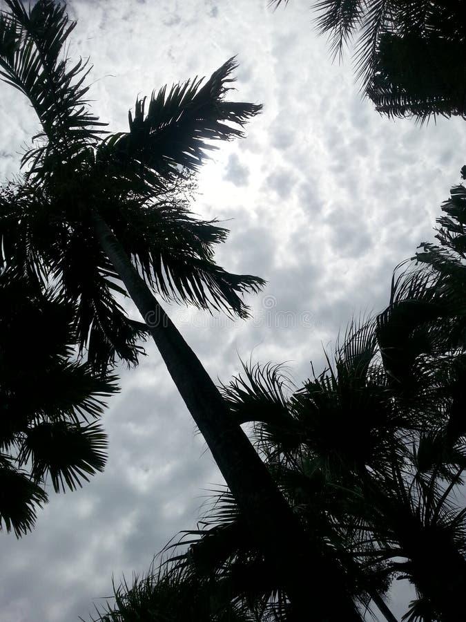 Wolken und Palmen lizenzfreie stockfotos