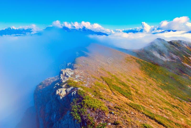 Wolkenabdeckungs-Gebirgswälder stockbilder
