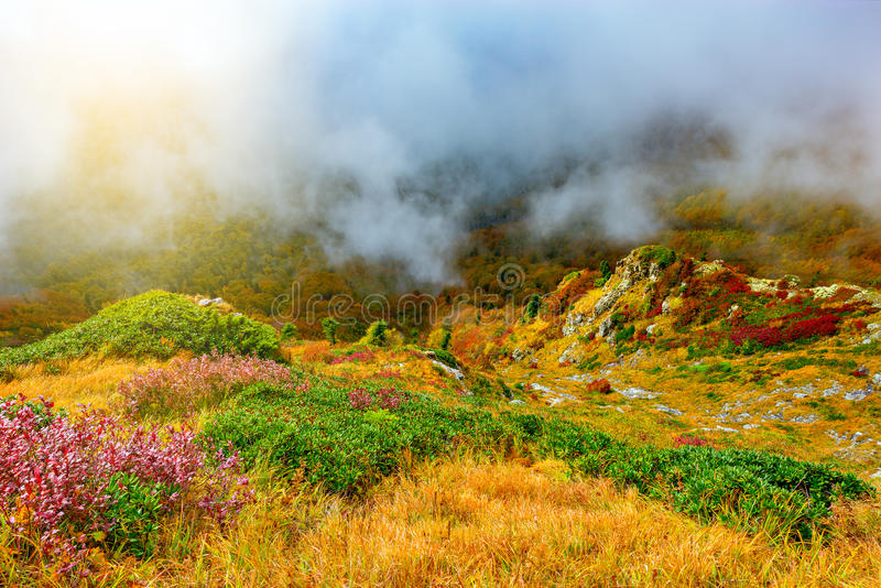 Wolkenabdeckungsbergwiese stockbilder