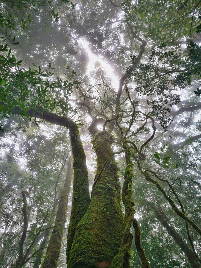 Wolkenbos, het Nationale Park van Doi Inthanon, Chiang Mai royalty-vrije stock afbeelding