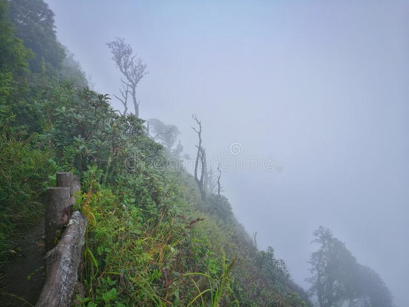 Wolkenbos, het Nationale Park van Doi Inthanon, Chiang Mai royalty-vrije stock fotografie