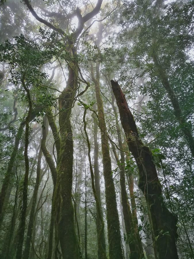 Wolkenbos, het Nationale Park van Doi Inthanon, Chiang Mai stock foto