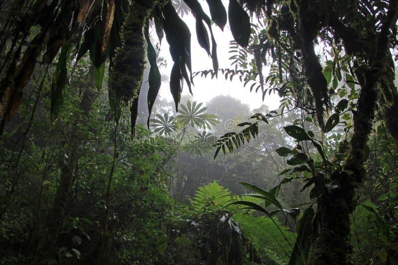 Wolkenbos van Reserva Biologica Bosque Nuboso Monteverde, Costa Rica royalty-vrije stock afbeeldingen