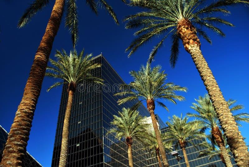 Wolkenkrabber en Palmen stock foto