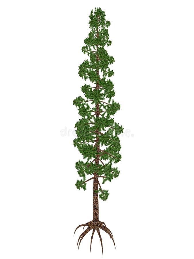 Wollemia nobilis杉木史前树- 3D回报 向量例证