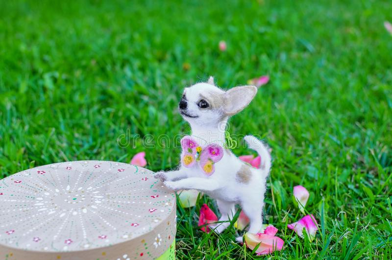 Wollminiatur des Chihuahuahundes stockbild
