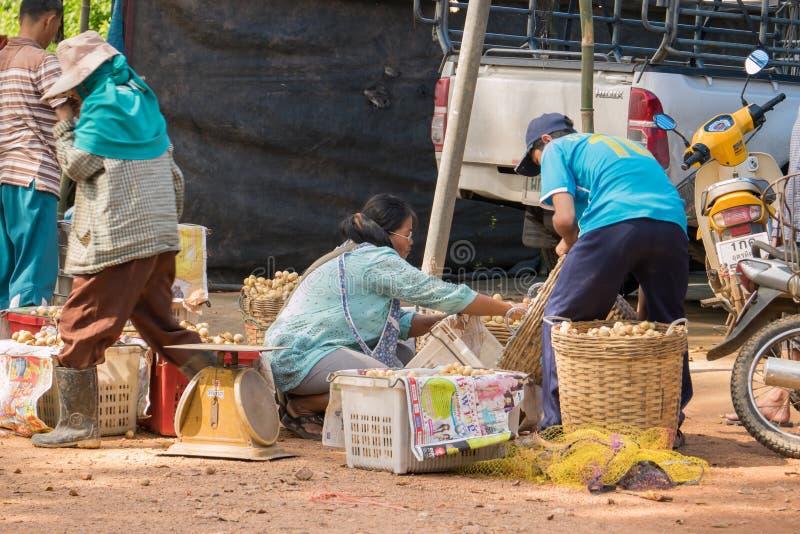Wollongong bönder säljer deras produkter till att köpa för affärsmän Under skördsäsongen Wollongong royaltyfri fotografi