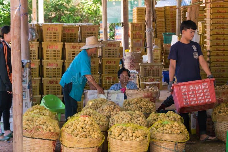 Wollongong bönder säljer deras produkter till att köpa för affärsmän Under skördsäsongen Wollongong royaltyfri foto