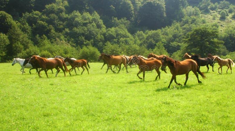 wolne konie obrazy royalty free