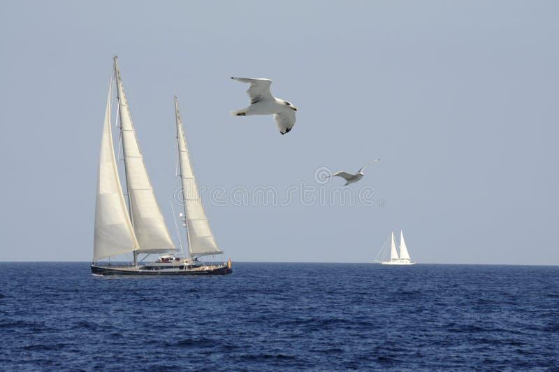 Wolność w wiatrze fotografia royalty free