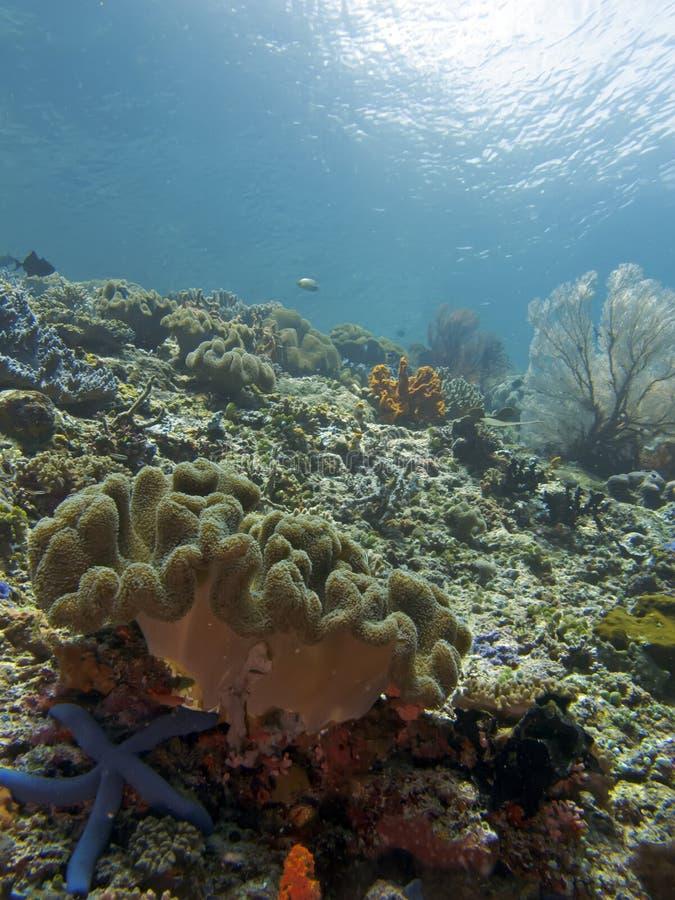 Wolrd subacqueo fotografie stock libere da diritti