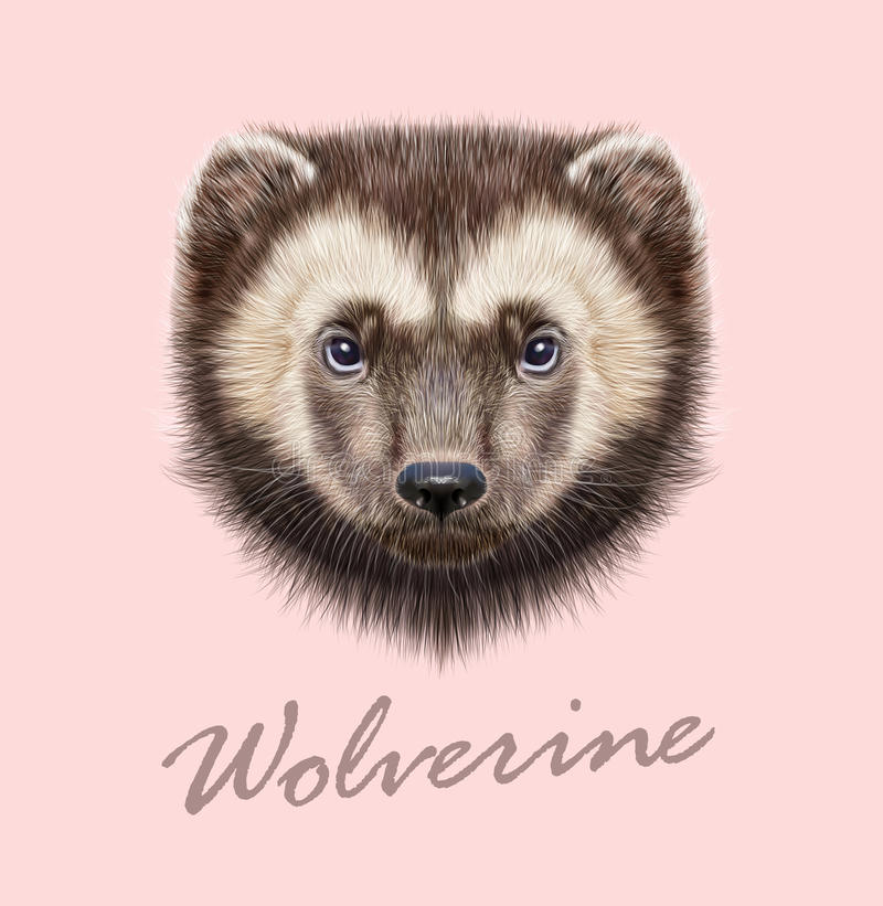 Wolverine Dier Vector Geïllustreerd Portret stock fotografie