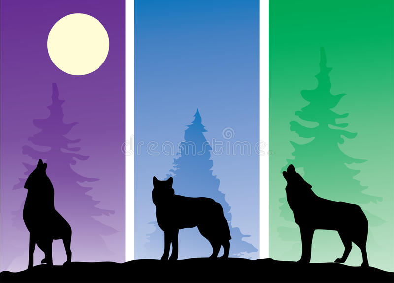 Wolves. Illustration of three wolves silhouettes