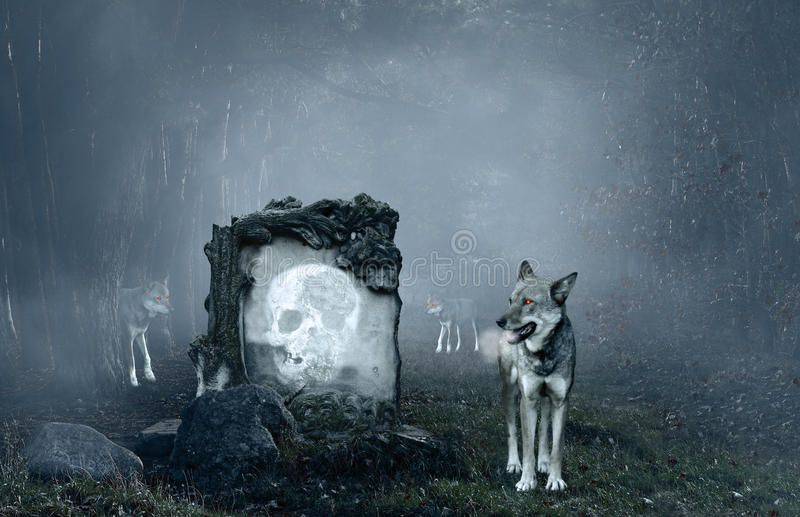 Wolves guarding an old grave stock images