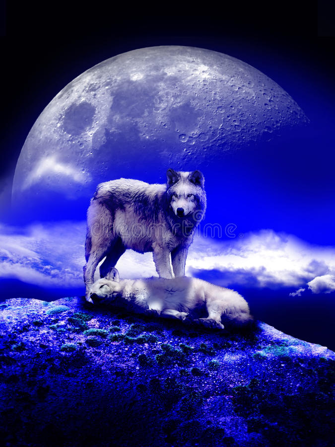 Free Wolves Under The Moon Royalty Free Stock Photos - 48587808