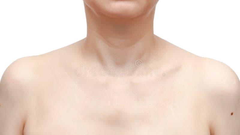 Woman& x27 ώμοι, πηγούνι, λαιμός και όπλα του s στο άσπρο υπόβαθρο στοκ εικόνες