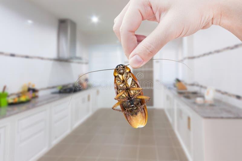 Woman& x27; 拿着在厨房背景的s手蟑螂 库存照片