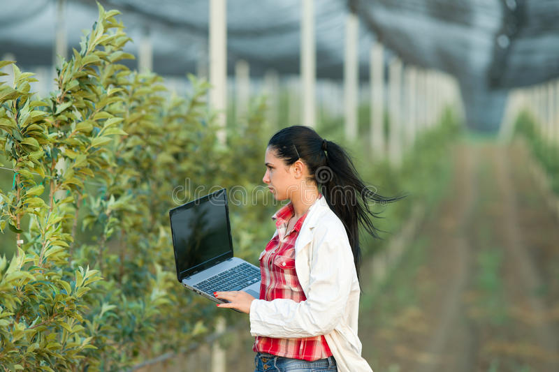 Woman agronomist in the orchard royalty free stock images