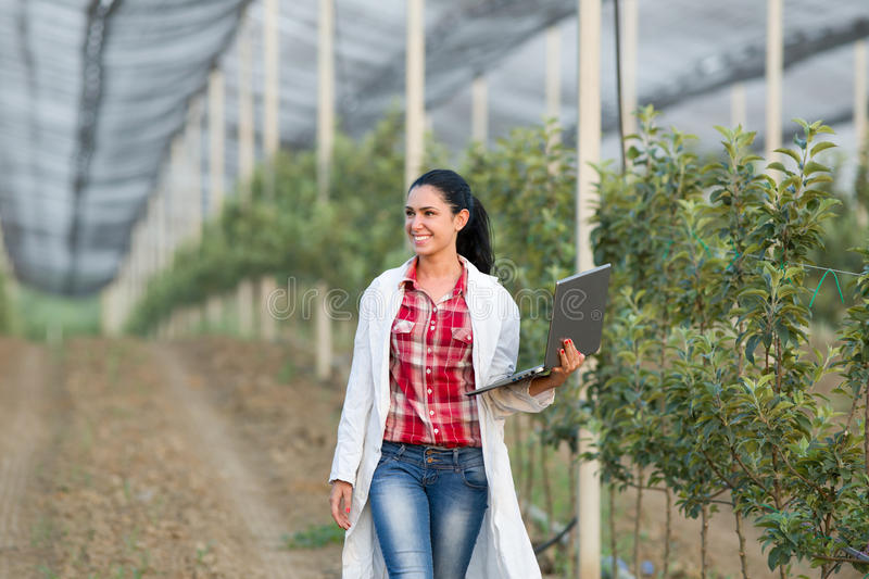 Woman agronomist in the orchard. Young woman agronomist with laptop walking beside apple trees in modern orchard with anti hail net royalty free stock photo