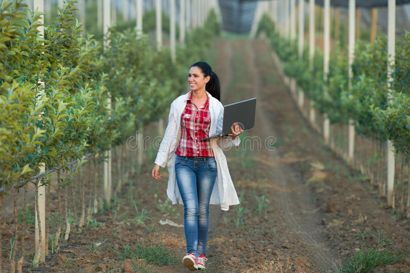 Woman agronomist in the orchard. Young woman agronomist with laptop walking beside apple trees in modern orchard with anti hail net stock photography