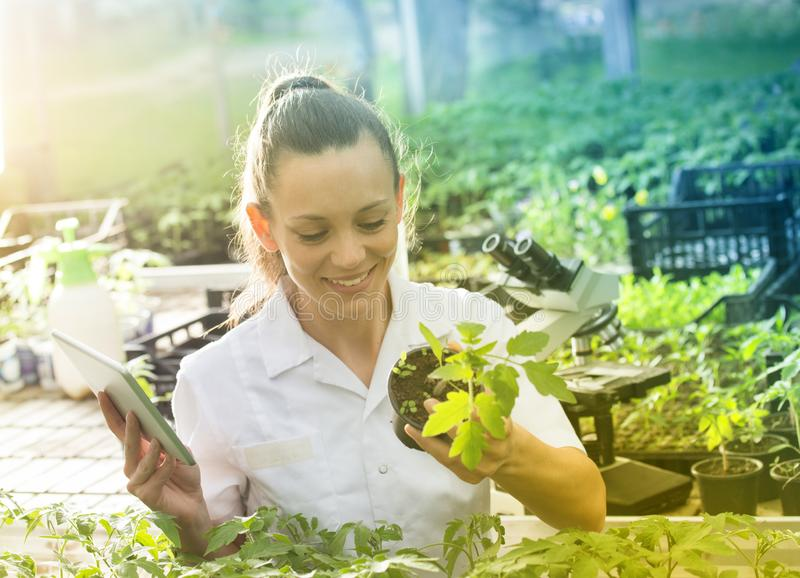 Woman agronomist with tablet and microscope in greenhouse. Young pretty woman agronomist in white coat working on tablet and with seedlings in greenhouse. Plant royalty free stock photography