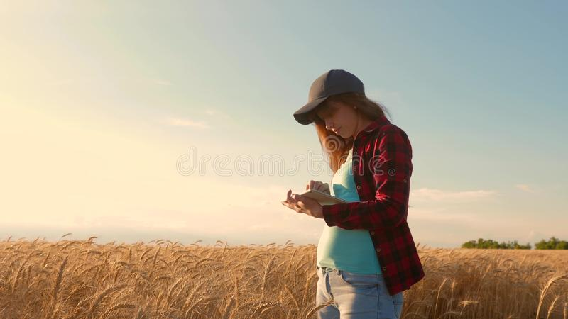 Woman agronomist with a tablet studies the wheat crop in field. entrepreneur in field of planning his income. Farmer stock photo