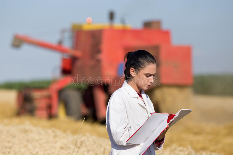 Woman agronomist in wheat field. Young woman agronomist standing in golden wheat field and writing notes. Combine harvester working in background royalty free stock photography