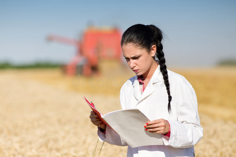 Woman agronomist in wheat field. Young woman agronomist in white coat reading documentation on wheat field. Combine harvester working in background stock photography